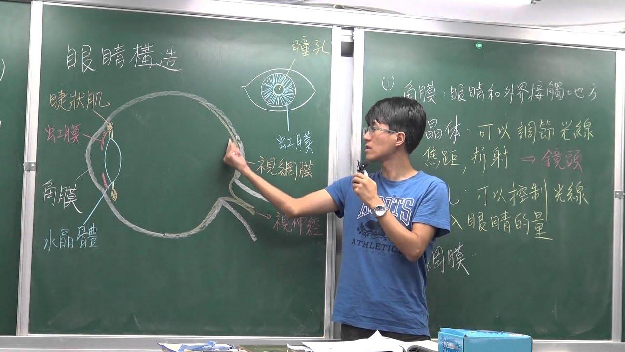國一上生物4-4光學儀器(3)-眼睛構造/近視/遠視/老花 - YouTube