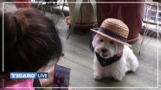 🤳🐩 À Singapour, le BUSINESS des animaux-influenceurs aux dizaines de milliers d'abonnés