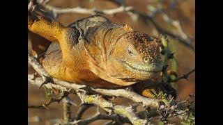 The Wild Galapagos