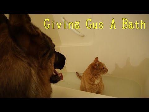 Bathing A Senior Cat