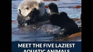 Laziest Ocean Animals | Azula