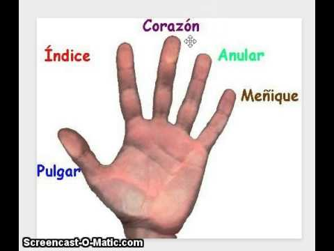Learn the names of fingers in Spanish.