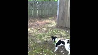 Training My Squirrel Dog
