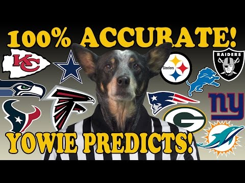 Dog Accurately Predicts All NFL Playoff Games! - 2017 Super Bowl