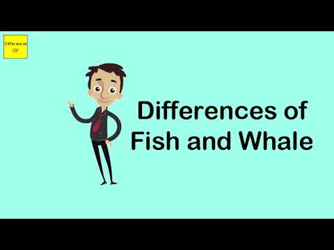 Differences Of Fish And Whale