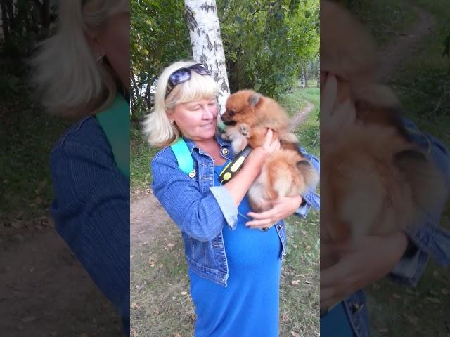 ВИДЕО ОТЗЫВ -НЕМЕЦКИЙ ШПИЦ ДЖАКЛИН ДЕВОЧКА 7 МЕС