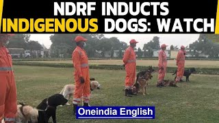 NDRF inducts 3 indigenous breed dogs for rescue operations: Watch the video | Oneindia News