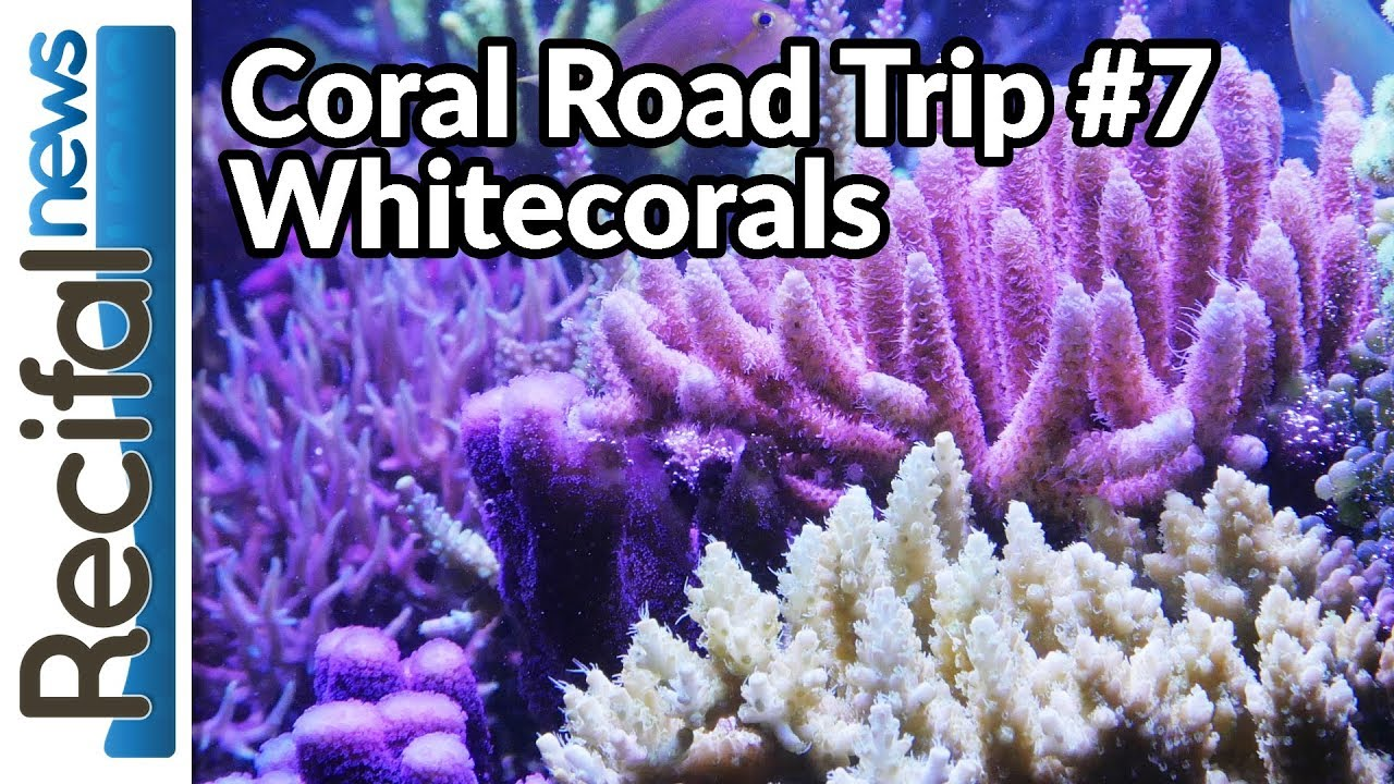 Whitecorals : visite du magasin de coraux - YouTube
