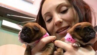 Клонирование: 100.000 долларов за щенка (2016)