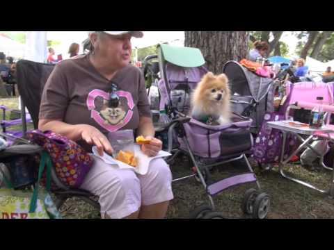 Recycled Pomeranians Schipperkes Rescue 20151017 Youtube