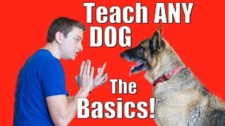 Dog Training 101: How to Train ANY DOG the Basics thumbnail