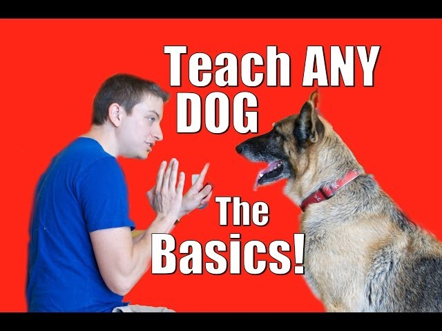 Dog Training 101: How to Train ANY DOG the Basics