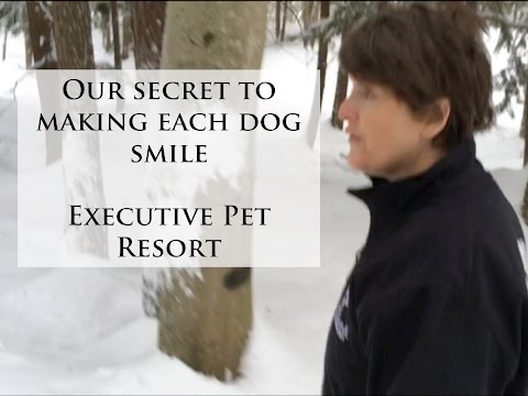 Executive Pet Resort presents Our Secrets to Making Each Dog Smile