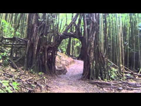 MANOA FALLS: Glimpse of Hawaii