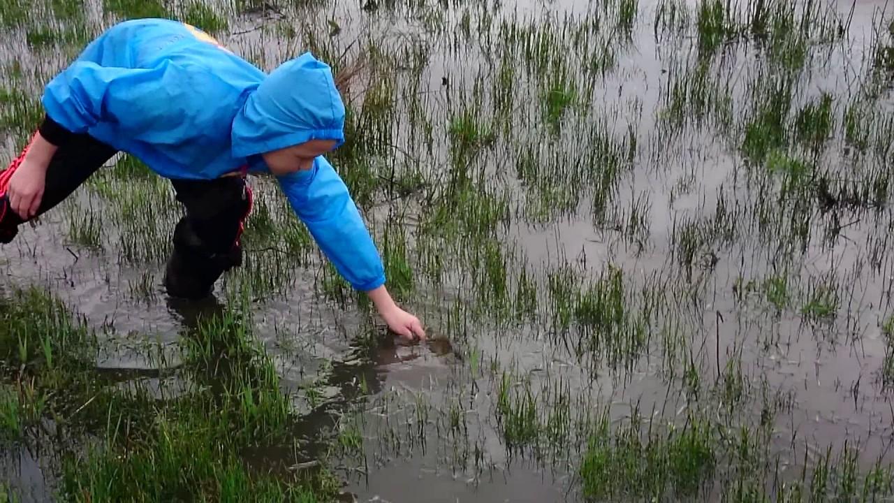 Видео ловим рыбу памятные монеты ссср куплю