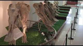 Кто такие мамонты? Эволюция отряда хоботных