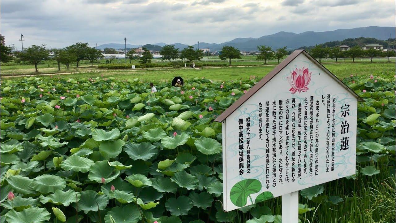 高松城址公園 蓮子の花 2019.07.09 - YouTube