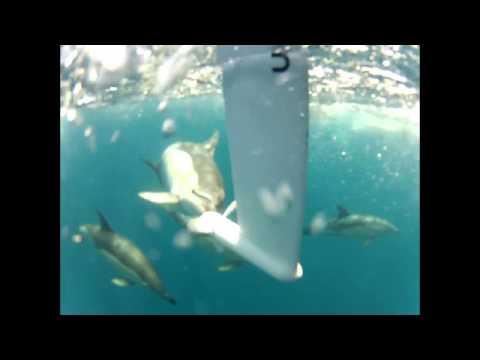 Dolphins appreciate green energy - watt&sea hydrogenerator