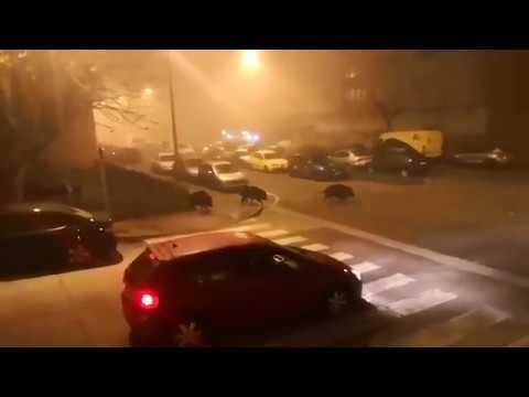 Tres jabalíes se pasean por A Piringalla