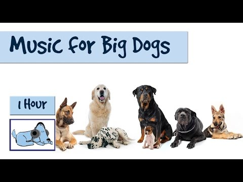 1 Hour of Relaxing Music for Big Dog Breeds. German Shepherd, Retriever, Rottweiler etc. 🐶 #RETLAB05