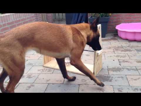 KOZE- Compilation des chiens les plus intelligents de ce monde