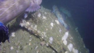 Researchers Explore Shipwrecks Off Calif. Coast