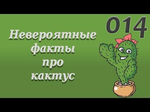 014. 4TOP. Невероятные факты про кактус