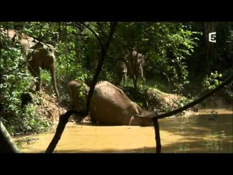 complicites sauvages : Les forêts tropicales