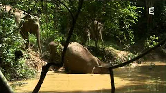 Complicités sauvages - Les forêts tropicale Hqdefault
