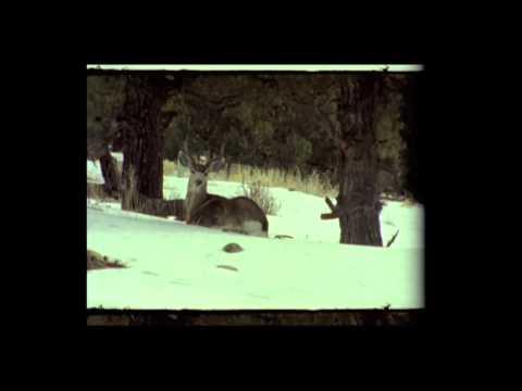 Клип Rumspringa - minds awake