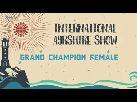 168   Ayrshire   Grand Champion
