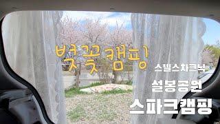 벚꽃캠핑/벚꽃명소/설봉공원/스파크차크닉