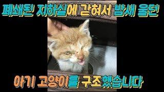 폐쇄된 지하실에 갇힌 아기고양이를 구조했어요