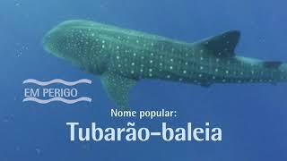 Bichos do Mar - Tubarão-baleia