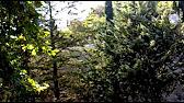 выживание - съедобные плоды кактуса - YouTube