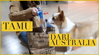VLOGMAS D19: KEDATANGAN TAMU DARI AUSTRALIA! | Cobain Starbucks Korea, unboxing Peko x  CHUU! 💕