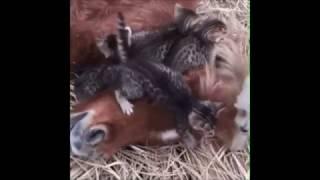 Гифки про животных!!!