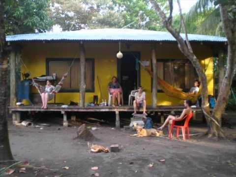 turtles volunteers -parismina-costa rica
