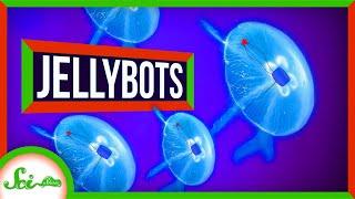Meet the Jellybots: Ocean-Exploring Biohybrid Robots