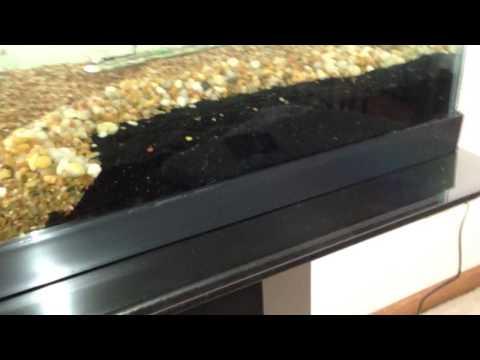 Fish tank stand: 20-29 gallon