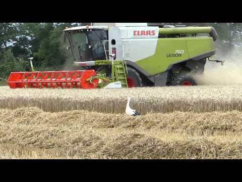 Moisson du blé, vidéo version longue 17 mn, en Alsace près de Colmar.
