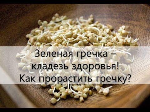 Пророщенные семена. Пророщенная пшеница. Технология