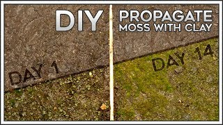 DIY | Propagate Moss with Clay