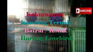 Manfaat Dan Kekurangan Kandang Ternak Sistem Baterai / Kandang Kotak Beternak Burung Lovebird
