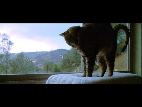 Time-lapse Cat Sleeps Through Storm