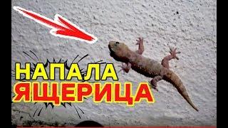 На нас напала ящерица в отеле Греции - Отдых и путешествие под срывом