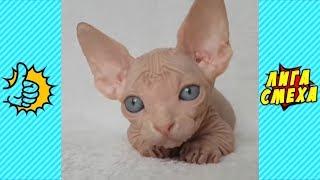 Попробуй Не Засмеяться С Животными - Смешные Видео Коты И Собаки! Приколы Про Животных 2018!