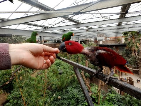 A day at Zoo Veldhoven, parrot refuge in the Netherlands