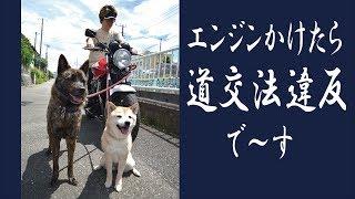 パワフルな甲斐犬ハルヱにホンダCB400SFを引かせてみました...が!w ↓...