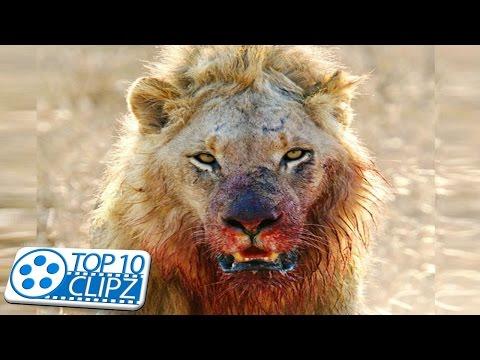 Top 10 Most Dangerous Animals on the Planet - TOP 10 CLIPZ